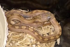 snake2_2-15